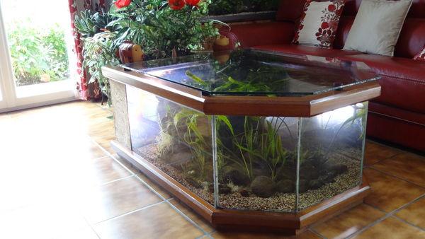 Table basse aquarium bois